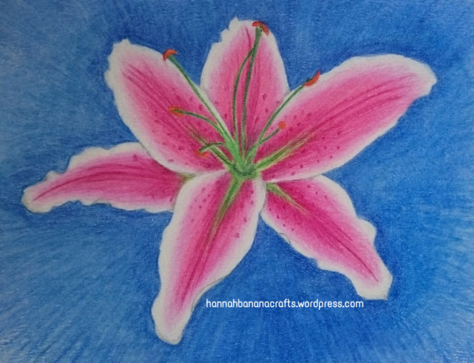 Drawing of lily coloured with Polychromos