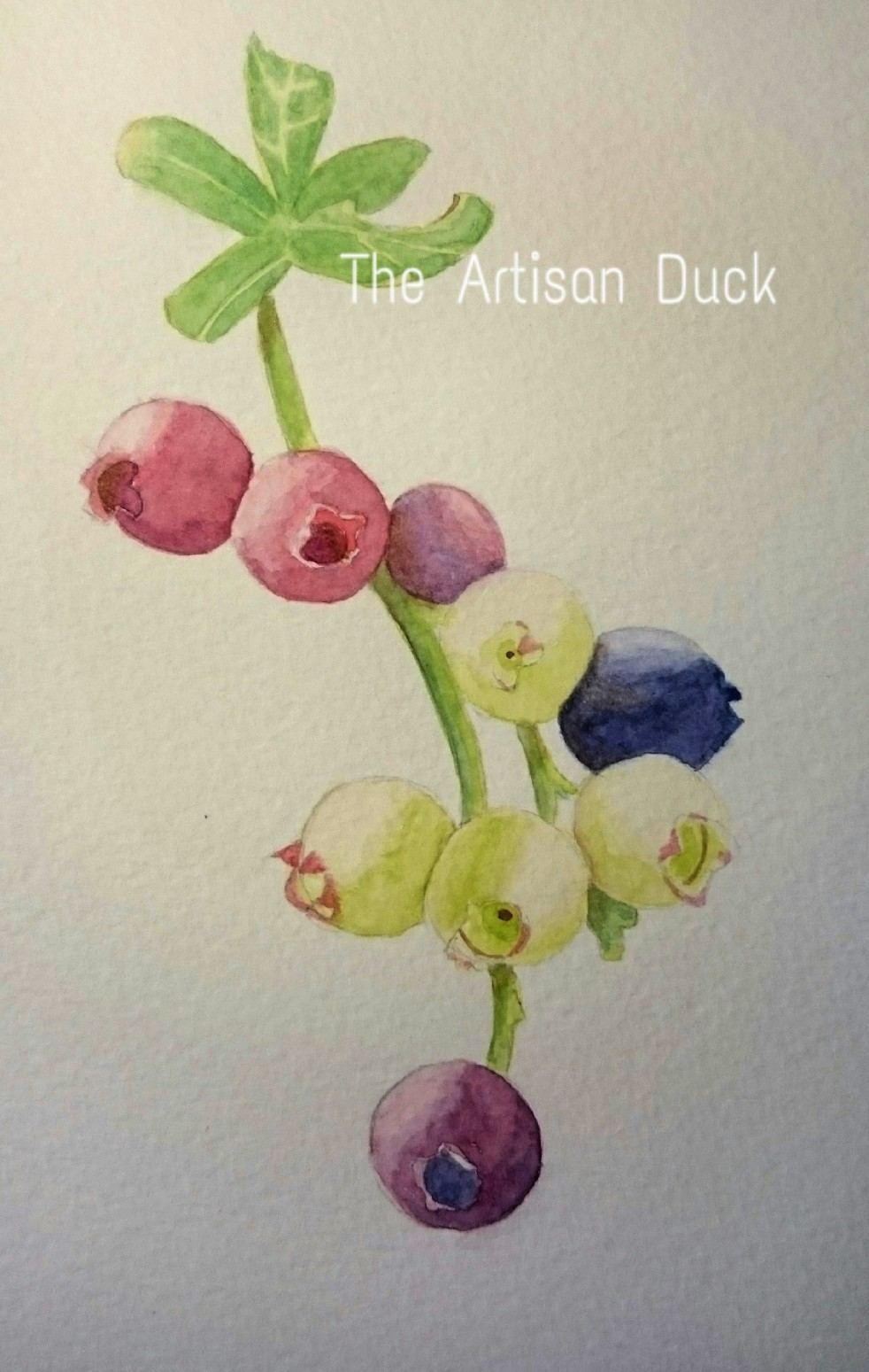 Watercolour bluberries painting