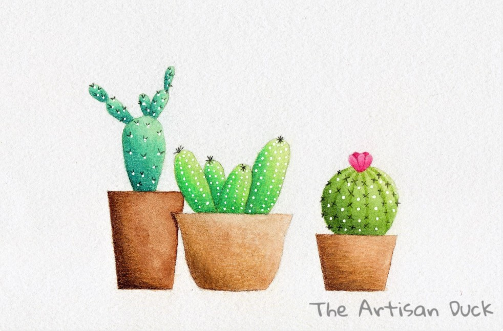 Cacti illustraion