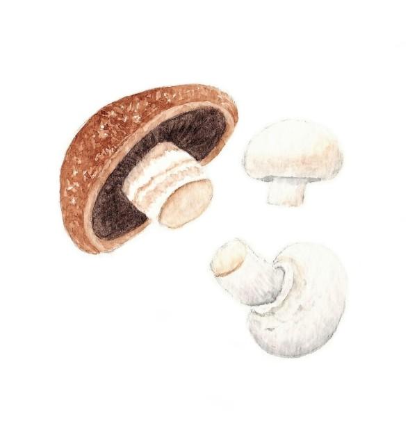Mushroom watercolour